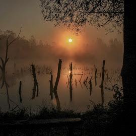 Early morning on ponds. by Rado Krasnik - Landscapes Waterscapes ( water, ponds, reflection, morning, sun, sunrize )