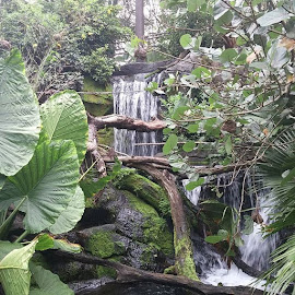 Waterfall by Stephen Heinly - Instagram & Mobile Android ( water, green, waterfall, plants )