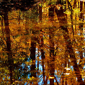 Autumn Color by Carl Testo - Landscapes Waterscapes ( stream, autumn, foliage, trees, woods )