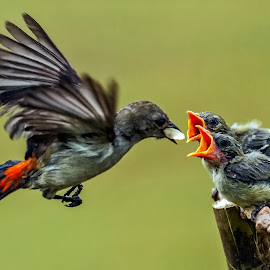 Breakfast time by MazLoy Husada - Animals Birds (  )