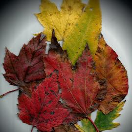 Leaves by Nancy Bowen - Digital Art Things ( fall leaves, creative lighting, vignette )