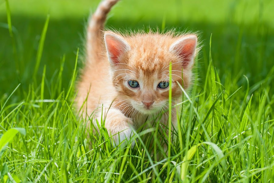 Kitten by Chloe Blow - Animals - Cats Kittens ( cutest cats )