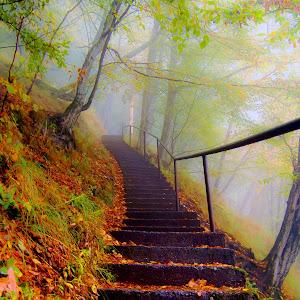 Treptele spre Cetatea Poienari.jpg