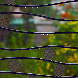 After the Rain by Prasanta Das - City,  Street & Park  City Parks ( scene, city park, rain )