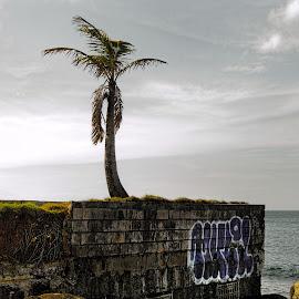 Palm Tree by Kevin Duke - Landscapes Beaches ( clouds, sky, sea, ocean, bricks, beach, rocks, wall, tropics )