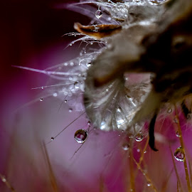 Purple Rain  by Franco Salis - Nature Up Close Other plants
