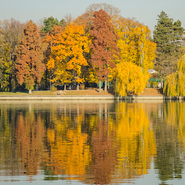 Autumn colors by Cătălina Panait - City,  Street & Park  City Parks ( pastel, reflection, smooth, nice, romania, symmetrical, bucharest, autumn, peaceful, autumnal, park, colors, beautiful, lake, scenic, reflecting, colours, color, horizontal, serene, fall, outdoors, concentric, brilliant, symmetry, herastrau )