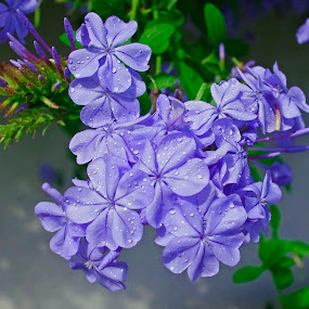 PurpleExplosion by Joanne Burke - Nature Up Close Flowers - 2011-2013