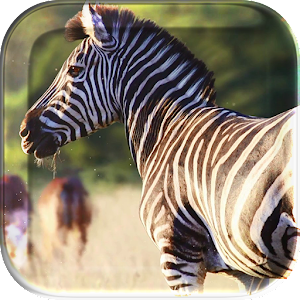 African Animals Live Wallpaper