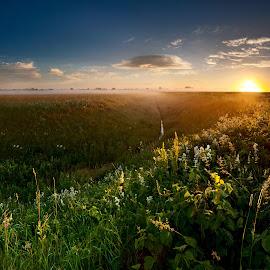 dawn  by Eugenijus Rauduve - Landscapes Prairies, Meadows & Fields ( field, sky, dawn, mist )