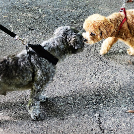 Let's be Friends? by Dennis  Ng - Animals - Dogs Portraits