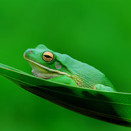 Alone by Agus Cungkring - Animals Amphibians