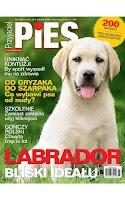 Screenshot of Przyjaciel Pies