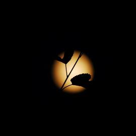 the moonlight by Zoran Zizak - Abstract Light Painting