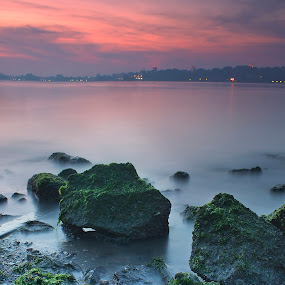 Moss, Moss and more Moss!! by Jerome Tan - Landscapes Waterscapes