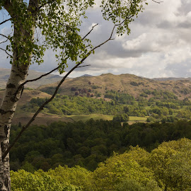 The Lakes by Ethan Jacobs - Landscapes Mountains & Hills ( countryside, hills, trees, landscape, the lakes )