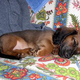 Sleeping by Jeff Dalton - Animals - Dogs Puppies