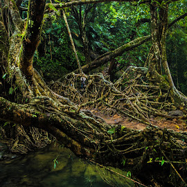 Root Bridge..... by Kaustav Adhikary - Landscapes Caves & Formations