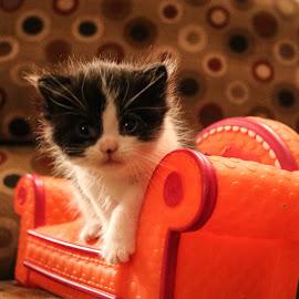 Little Salem by Latia Boykin - Animals - Cats Kittens ( cat, kitten, pretty )