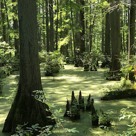 Heron pond by Teresa Hoyt - Nature Up Close Trees & Bushes (  )