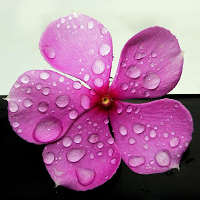 in rains.... by Vatsal Patel - Nature Up Close Flowers - 2011-2013 ( water, nature, rain, flower )