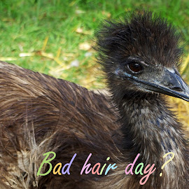 Bad hair day? by Ingrid Anderson-Riley - Typography Captioned Photos