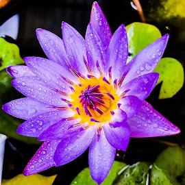 by Rudesphere Corminal - Flowers Flower Gardens