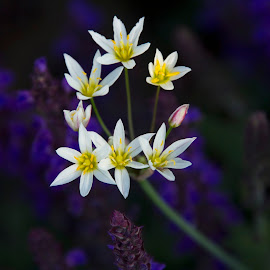white flowers by Scott Thomas - Nature Up Close Other plants ( flowers, white, yellow, landscape, flower )