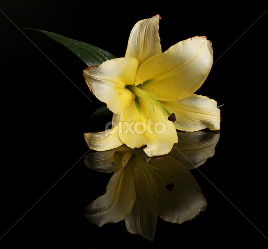 Lilly with reflection by Cristobal Garciaferro Rubio - Nature Up Close Flowers - 2011-2013 ( reflection, drop, drops, reflections, flowers, lilly, flower )