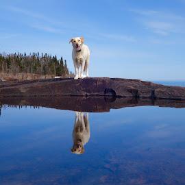 Betsy Reflections by Sandra Updyke - Animals - Dogs Portraits ( betsy, reflections, lake superior, dog, posing )