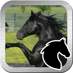 Black beauty horse jump for Android