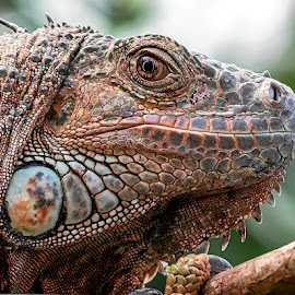 by Renos Hadjikyriacou - Animals Reptiles