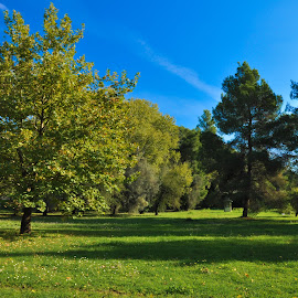 Green oasis by Stavros Argyropoulos - Landscapes Forests ( ολυμπια, green, greece, forest, nikon d90, olympia, nature, polarized, ilia, pl, oasis, ηλεια, filter, ελλαδα )