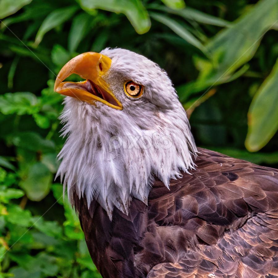 by Judy Rosanno - Animals Birds ( august 2018, san antonio zoo )