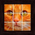 Cats Puzzles - 101 pictures