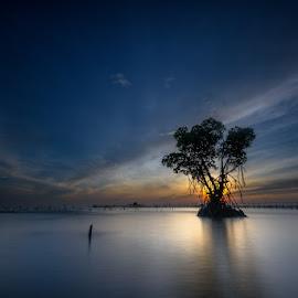 bright tree by Rocky Jaya - Landscapes Waterscapes