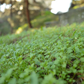 Green Slope by Vagelis Baslis - Nature Up Close Leaves & Grasses ( nature, grass, green, nature up close, leaves )
