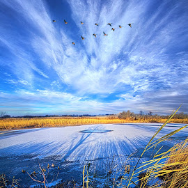 On Frozen Pond by Phil Koch - Landscapes Prairies, Meadows & Fields ( vertical, wisconsin, ray, yellow, travel, landscape, photography, sun, life, sky, nature, emotions, weather, horizons, light, inspired, office, clouds, heaven, colors, art, twilight, mood, journey, horizon, scenic, morning, living, portrait, country, field, environment, dawn, blue, serene, sunset, outdoors, meadow, beam, lines, earth, sunrise, natural )