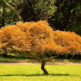Golden Tree by Barbara Horner - Nature Up Close Trees & Bushes ( up close, orange, nature, tree, color, yellow )