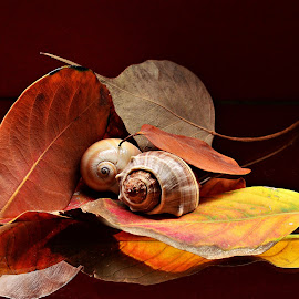 Autumn Sonata by Prasanta Das - Nature Up Close Other Natural Objects