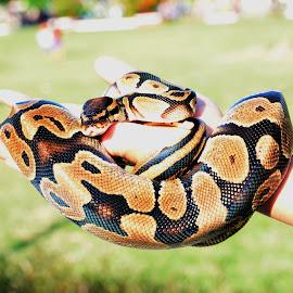 by Pixo Kars - Animals Reptiles