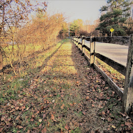 Taking a stroll in the park by Mary Gallo - City,  Street & Park  City Parks ( fence, nature, park, trail, fall, farm park )