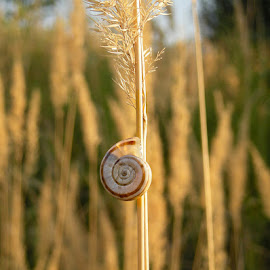 ▲ ☚► one◄☛▲ by MissAna M - Nature Up Close Other Natural Objects ( natural light, simplicity, nature, nature close up, snail )