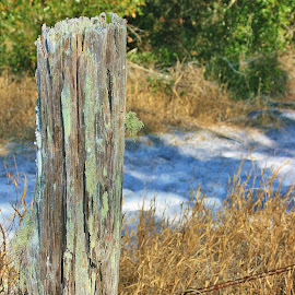 Rustic Fence Post by Betsy Calder - Landscapes Prairies, Meadows & Fields ( fence post, moss covered, rustic, fields, weathered )