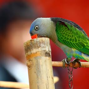 Eating by Dije Melankolia - Animals Birds