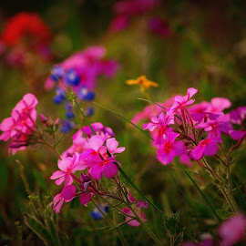Wildflowers  by Brenda Shoemake - Flowers Flowers in the Wild (  )