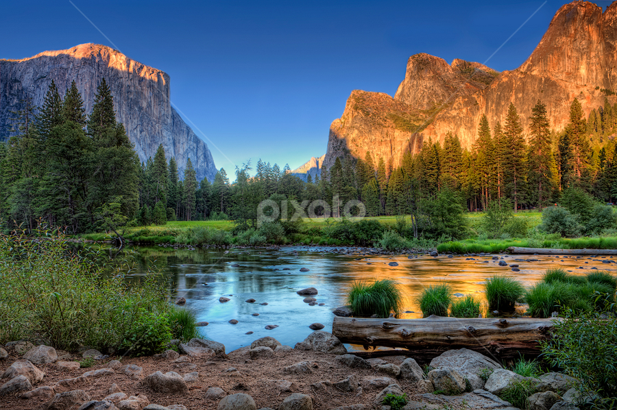 El Capitan & Cathedral Rocks reflected in Merced River by Ellen Yeates - Landscapes Mountains & Hills ( canon, merced river, ca, wood, rock, flow, valley, landscape, mereced, ellen, cathedral rocks, mountains, tree, yosemite valley view, calif, valley view, water, hdr, grass, california, yosemite national park, yosemite, sunset, cathedral rock, yeates, el capitan, river )