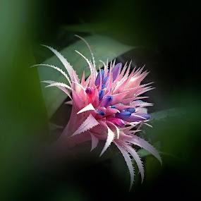 by Pete Schmit - Flowers Single Flower