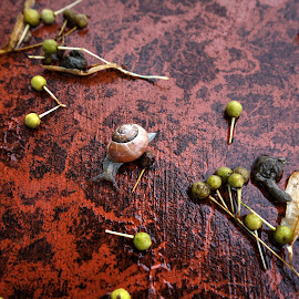 by Keld Helbig Hansen - Animals Other