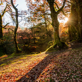 Irish woods  by Benjamin Arthur - Landscapes Forests